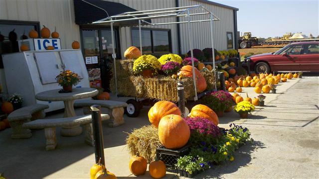 pumpkinsandmums