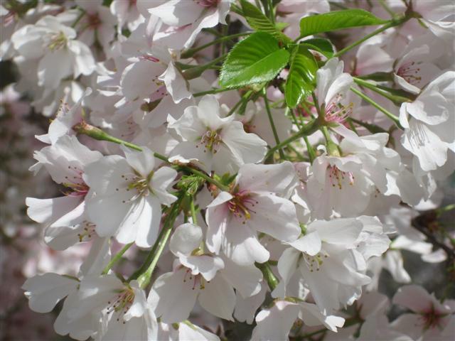 springflowers7